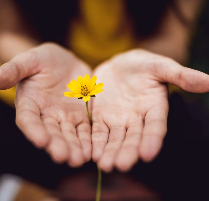 Hands holding a daisy